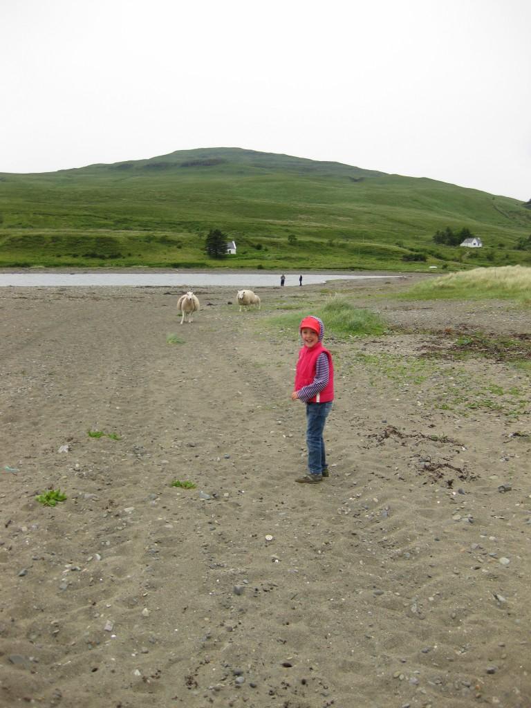 The resident beach sheep making a dash for Natalie