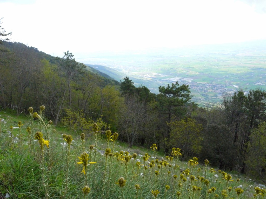 Hiking Subasio - Wildflowers 2