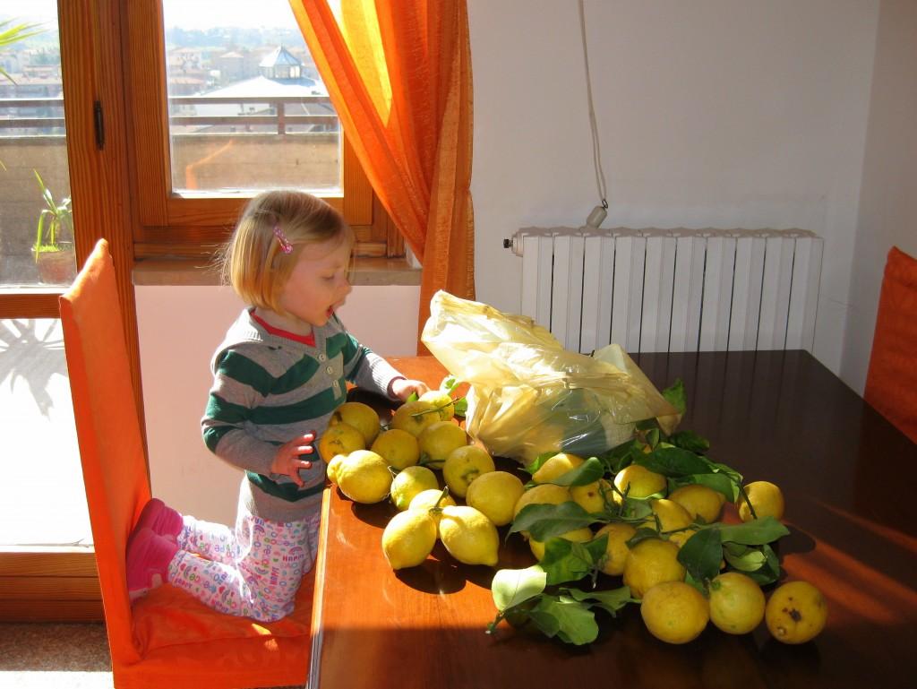 Sophie inspecting the lemons 1