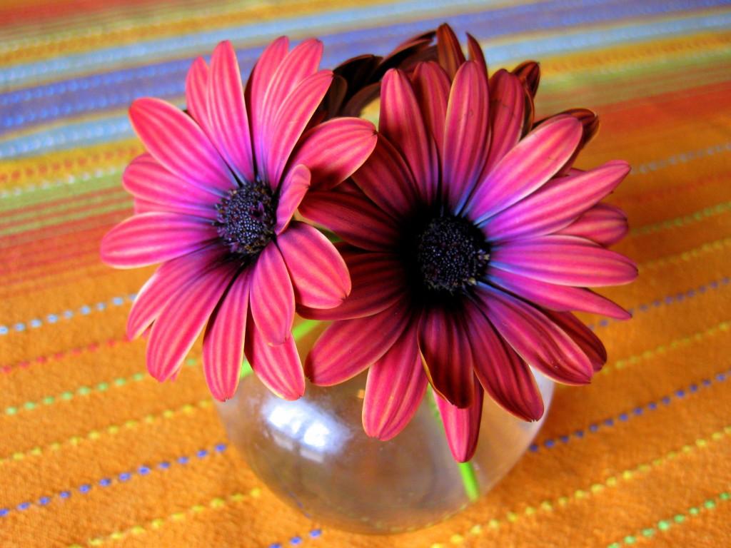 Striped daisies 3