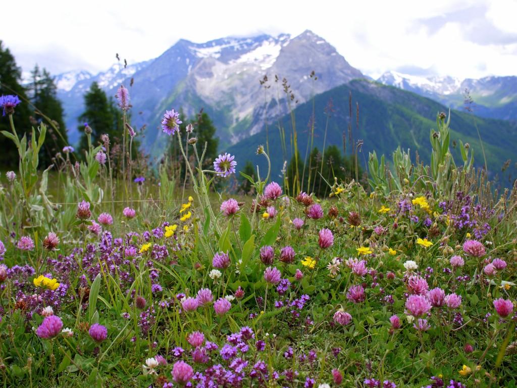 Wildflower altar 2