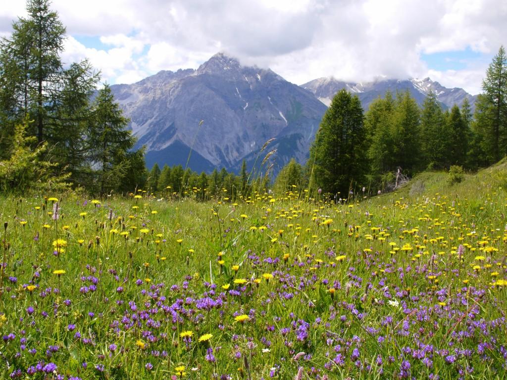 Wildflower altar 7