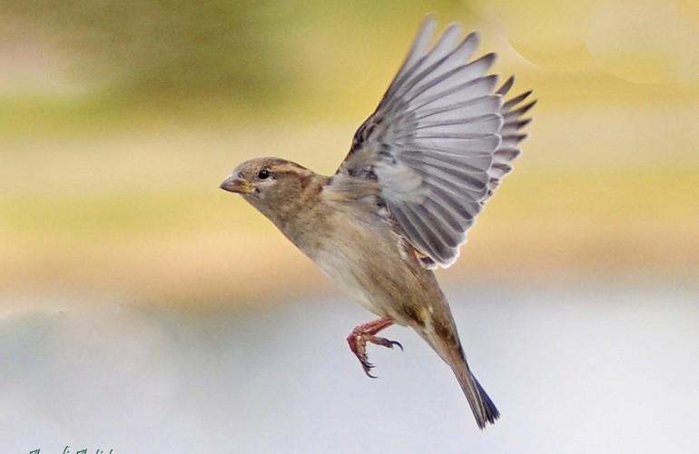 08 - Sparrow landing