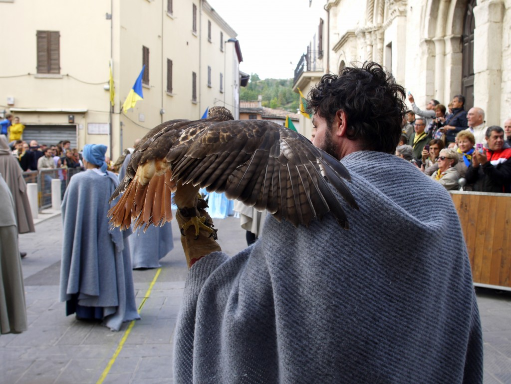 San Facondino - Birds of prey 2